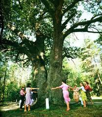 живое дерево лечение