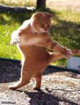 Бартер по-кошачьи