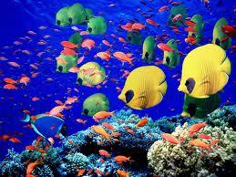 Рыбкотерапия