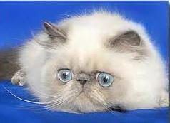 смешные рассказы про кошек