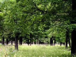 какой лес кому помогает