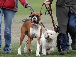 Характер человека по породе собаки
