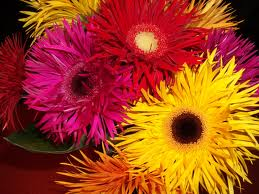 Определение характера по любимому цветку