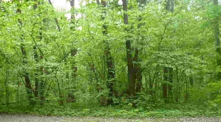 Славянские обереги из дерева