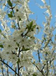 Как предупредить весенний авитаминоз?