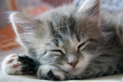 Счет для сна