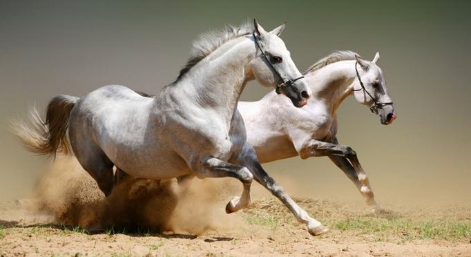 Лошадка - лекарь и хранительница