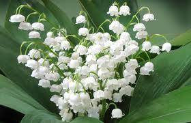 Майские цветы благополучия