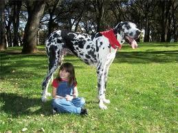 Узнайте, какая собака подходит Вам по гороскопу