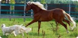 Любимый питомец Вашего знака Зодиака в год Лошади