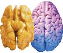 Еда, похожая на органы человека