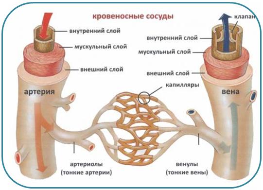 Лечение капилляров